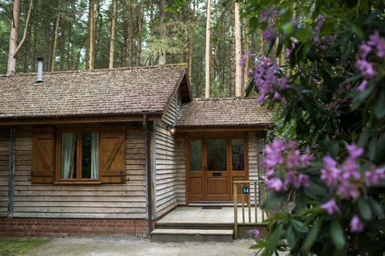 Image showing a log cabin and rhododendron bush